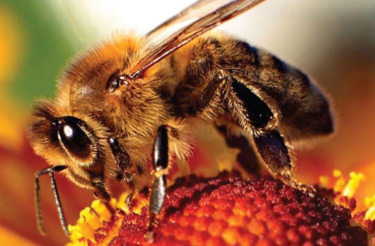 Pasieka Ratunkowa dla Pszczół