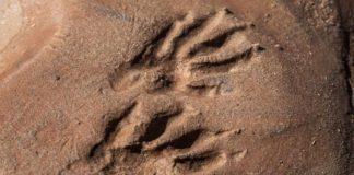 4 gatunki zwierząt pod ochroną w polsce