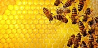 pszczoły trzeba ratować