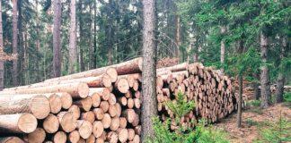 wycinka drzew przepisy