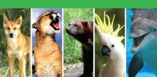 Światowy Dzień Zwierząt Ekologo