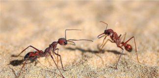 Mrówki - 10 ciekawostek, które nas zadziwiają