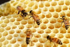miód pszczeli - gatunki miodów - właściwości miodu